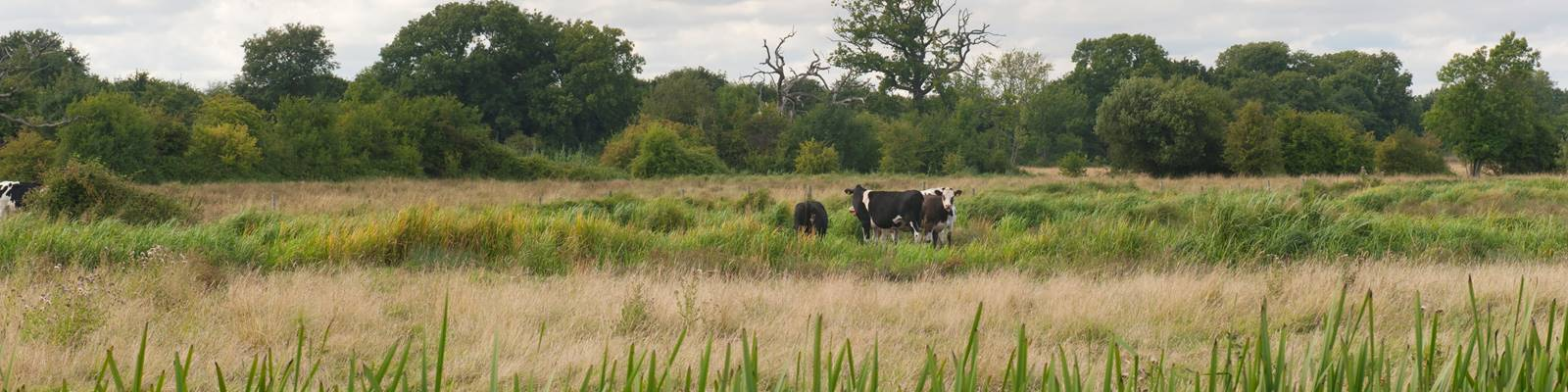 Itchen_Valley_Country_Park5.jpg