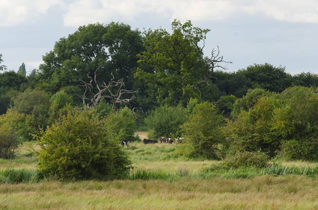 Itchen_Valley_Country_Park55.jpg (1)